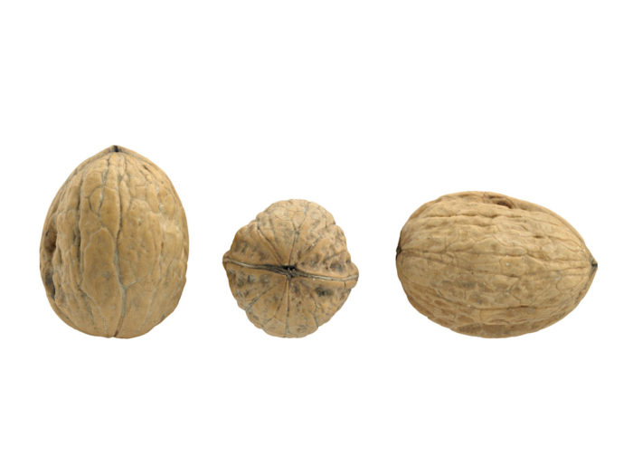 front view rendering of three walnut 3d models