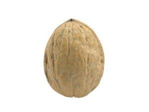 Walnut #1