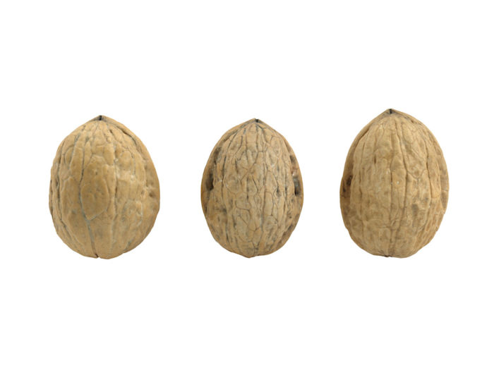 back view rendering of three walnut 3d models