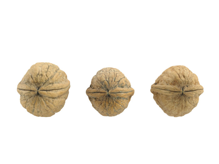 top view rendering of three walnut 3d models