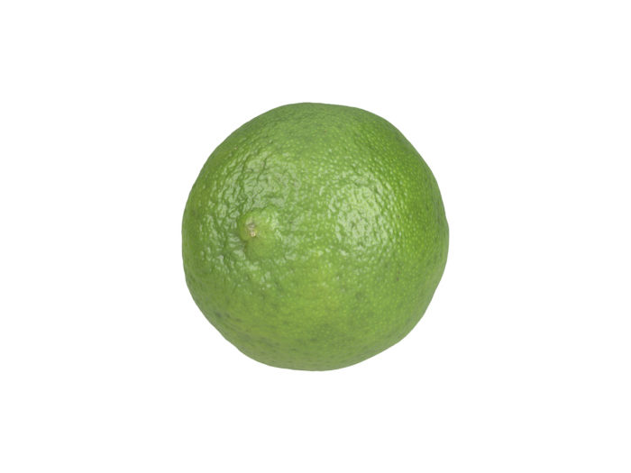 bottom view rendering of a lime 3d model