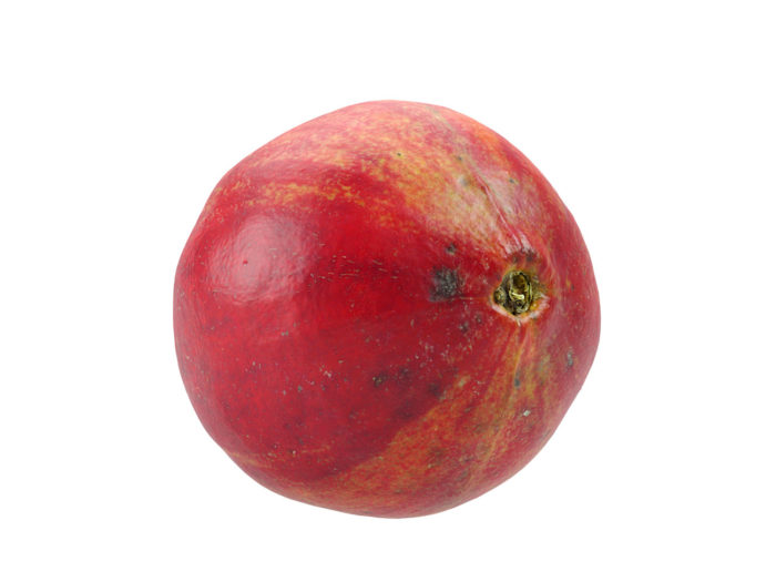 bottom view rendering of a pomegranate 3d model