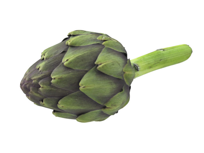 perspective view rendering of an artichoke 3d model