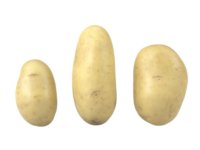side view rendering of a set of three different potato 3d models