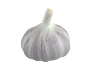 Garlic #1