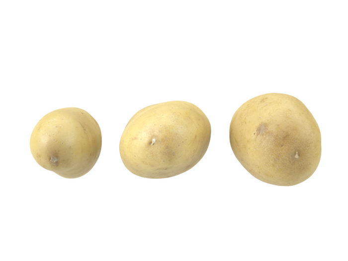 bottom view rendering of a set of three different potato 3d models