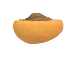 Apricot Half #1