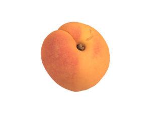 Apricot #1