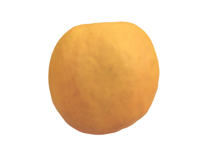 back view rendering of an apricot half 3d model
