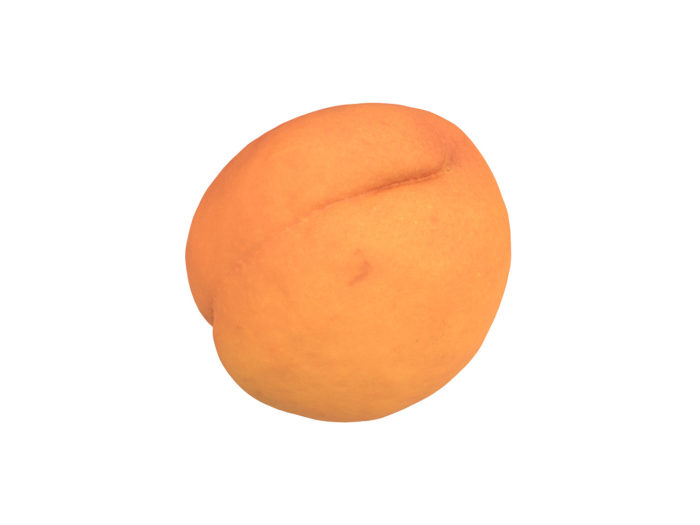 bottom view rendering of an apricot 3d model