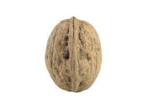 Walnut #2