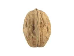 Walnut #3