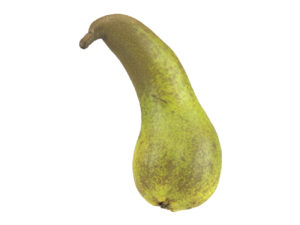 Unique Pear #1