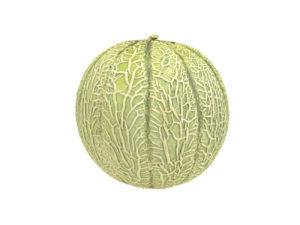 Charentais Melon #1