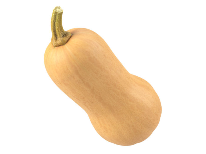 perspective view rendering of a butternut squash 3d model