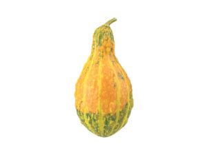 Decorative Gourd #1