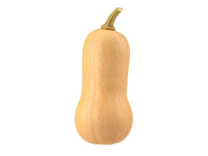 side view rendering of a butternut squash 3d model