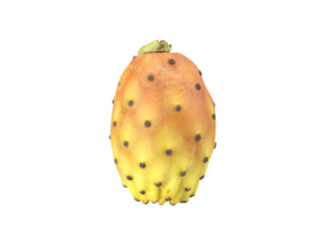 Prickly Pear #1