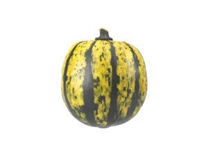 Decorative Gourd #2