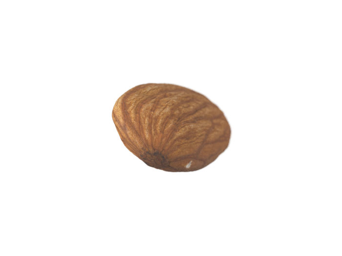 bottom view rendering of an almond 3d model
