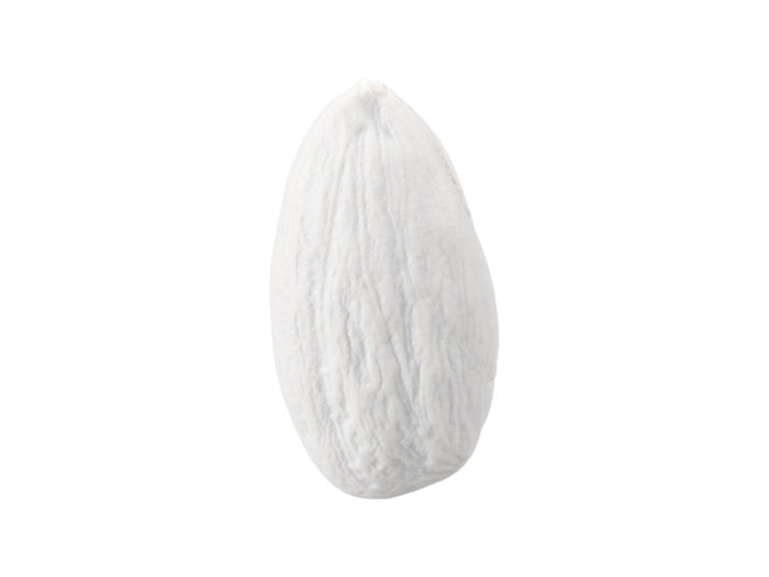 clay rendering of an almond 3d model