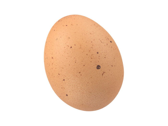 perspective view rendering of an egg 3d model