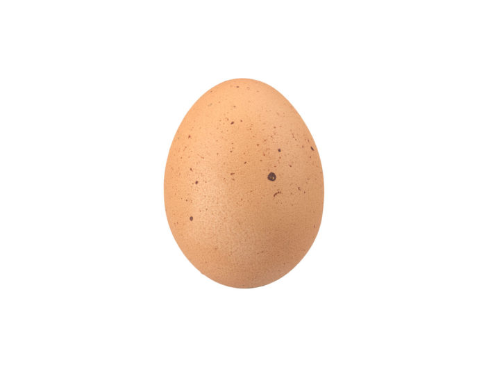 side view rendering of an egg 3d model