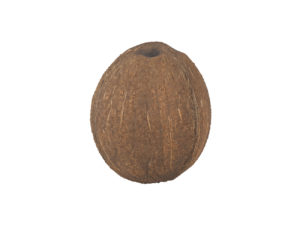 Coconut #1