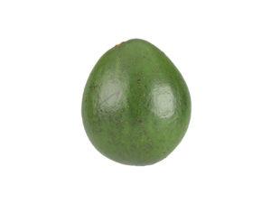 Avocado #3
