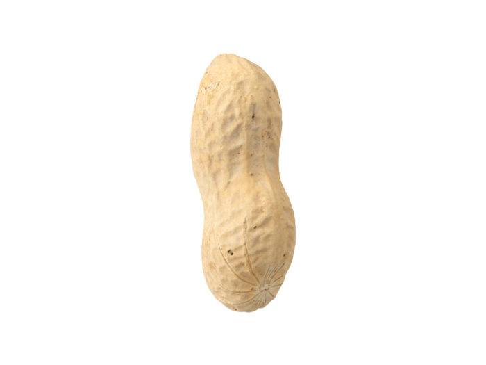 side view rendering of a peanut 3d model