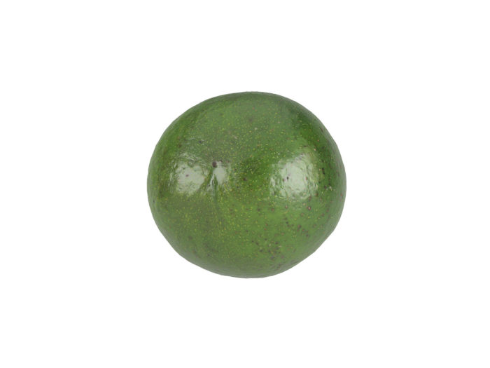 bottom view rendering of an avocado 3d model