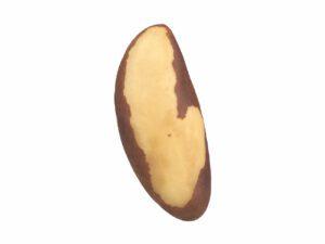 Brazil Nut #1