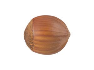 Hazelnut #1