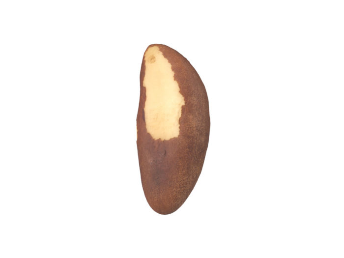 side view rendering of a brazil nut 3d model
