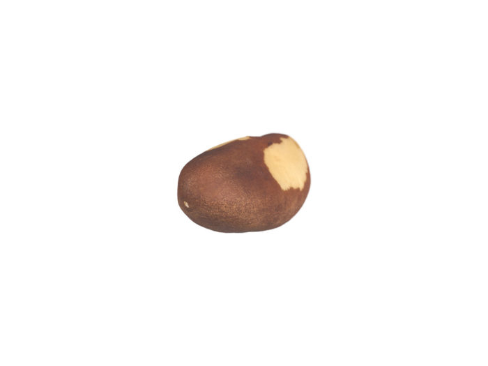 bottom view rendering of a brazil nut 3d model
