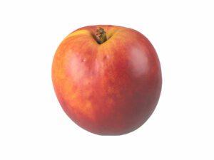 Nectarine #1