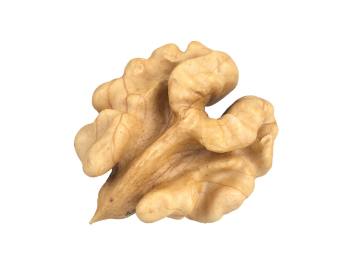 top view rendering of a walnut kernel 3d model