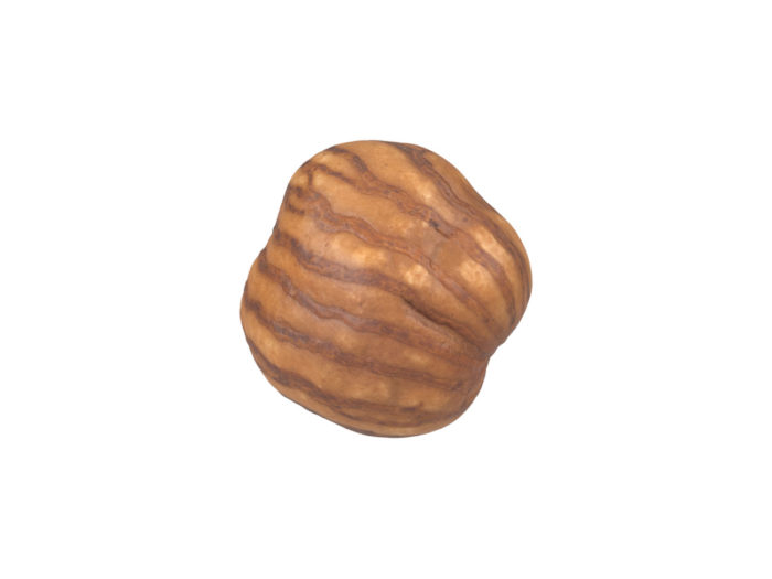 bottom view rendering of a hazelnut kernel 3d model