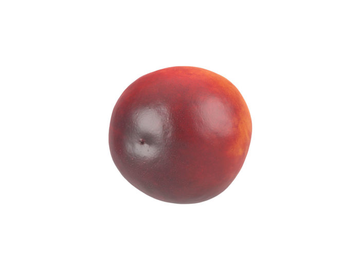 bottom view rendering of a nectarine 3d model