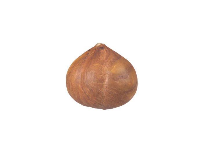 side view rendering of a hazelnut kernel 3d model