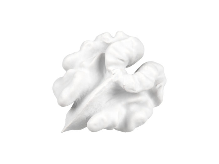 clay rendering of a walnut kernel 3d model