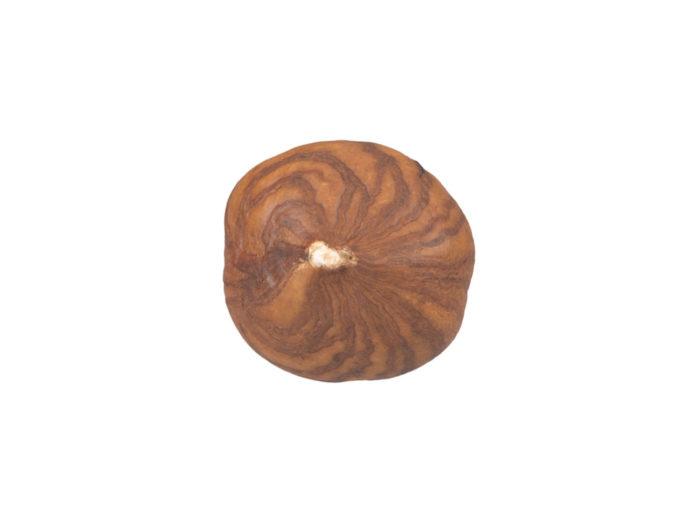 top view rendering of a hazelnut kernel 3d model