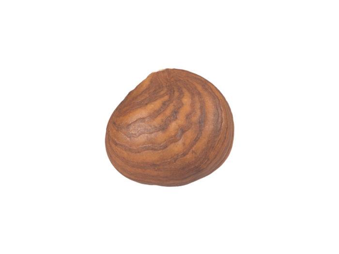 side view rendering of a hazelnut kernel 3d model