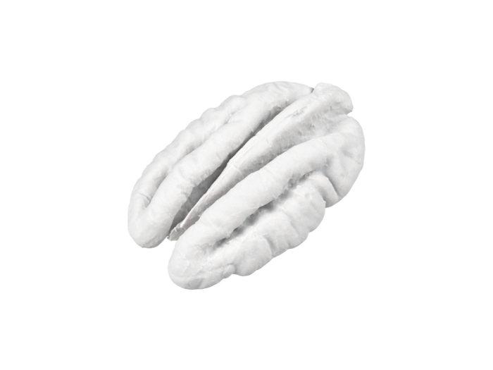 clay rendering of a pecan nut 3d model