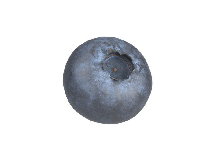 perspective view rendering of a blueberry 3d model