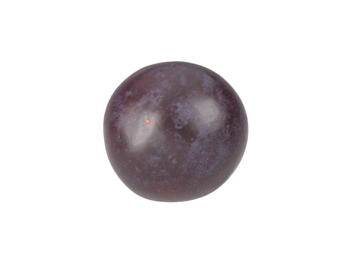 bottom view rendering of a plum 3d model