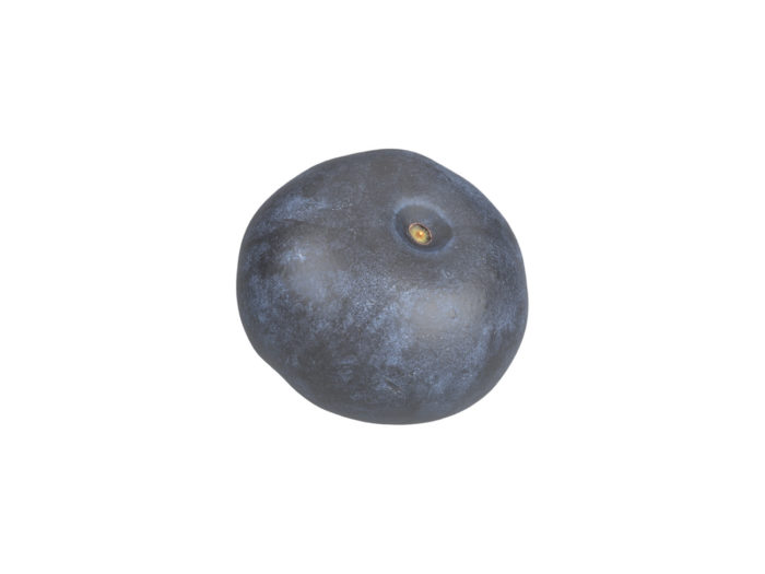 bottom view rendering of a blueberry 3d model