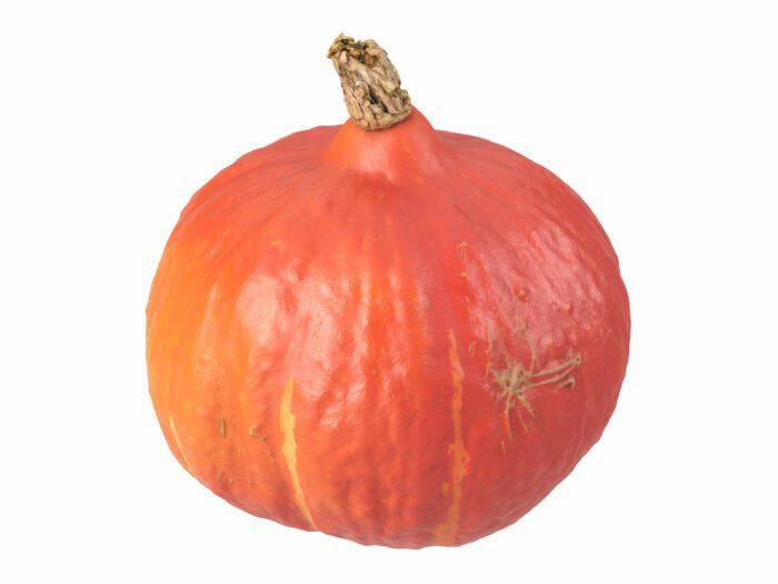 perspective view rendering of a hokkaido pumpkin 3d model