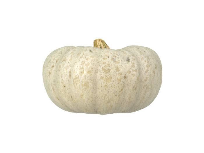 side view rendering of a kabocha squash 3d model