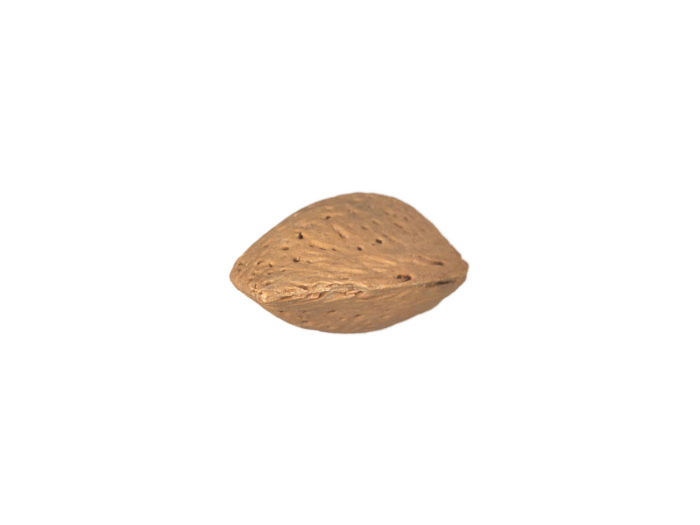 top view rendering of an almond in shell 3d model